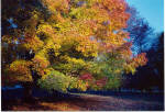 Brandywine Autumn