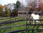 Brandywine Horse Farms